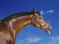 Horse blue sky