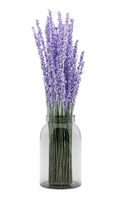 purple lupine flowers in glass jar isolated on white background