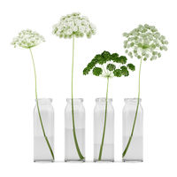 wild carrot flowers in jars isolated on white background