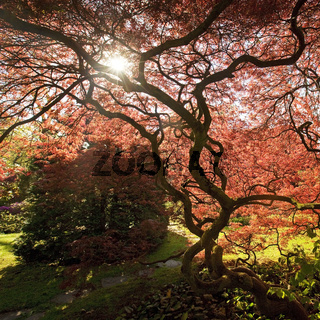 LEV_Japanischer Garten_17.tif