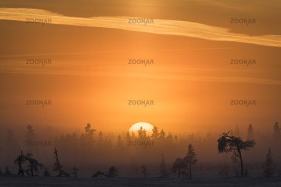 wintery landscape in fog, Lapland, Sweden