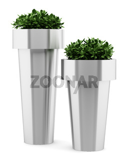 two houseplants in metallic pots isolated on white background