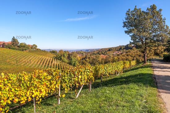 Hills and vineyards of Piedmont.