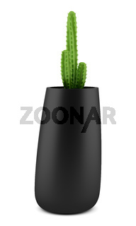 cactus in pot isolated on white background