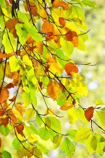 Buchblätter im Herbst