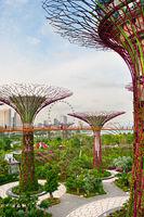 Futuristic garden, Singapore