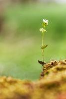 Kleine Blume im Wald