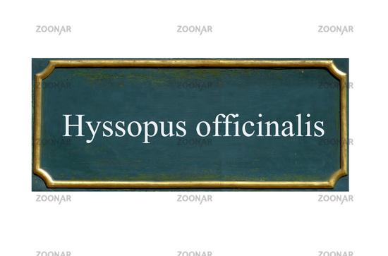 shield hyssopus officinalis