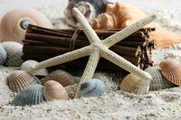 Beach - sea shells