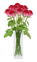 red roses in glass vase isolated on white background