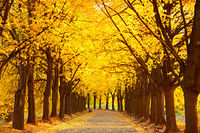 Autumn lime alley