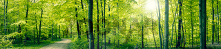 Green forest panorama landscape
