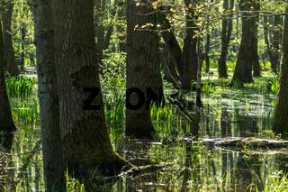 Landschaft am Dümmer See-137