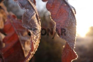 Blätter Sonne und Eis