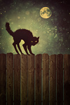 Black cat on fence at  night with vintage look