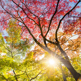 Colorful autunm treetops.