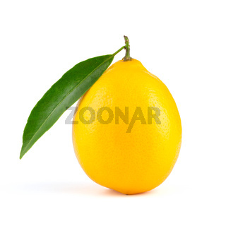 Yellow lemon with leaf isolated