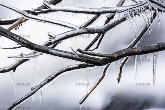 ice covered branches, Lapland, Sweden