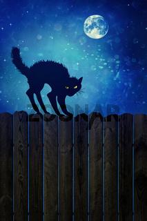 Black cat on wood fence at  night