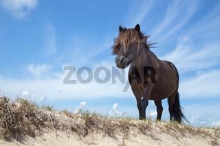 Black pony on sand with blue sky