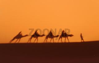 Schatten einer Karawane in der Wüste