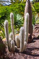 Jungle park at Tenerife Canary