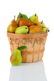 Bartlett and Bosc Pears in Basket