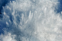 Ice needles like a forest