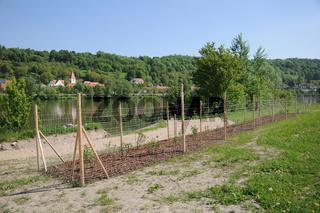 Ufergestaltung, Wildschutzzaun, Donau