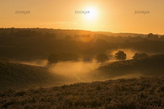 morning mist... Veluwe *Netherlands*