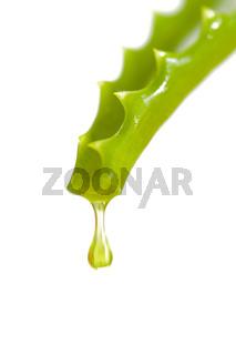 Aloe vera als Naturmedizin