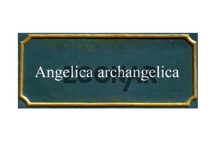 schild Angelika ,  Engelwurz