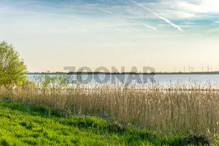 Landschaft am Dümmer See-82