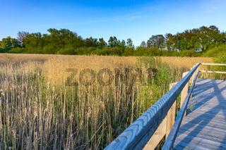 Landschaft am Dümmer See-71