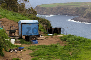Dösende Hunde an der Küste bei Porto Formosa, Sao Miguel, Azoren