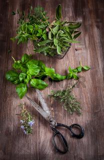 Different fresh herbs with garden scissors on wooden background