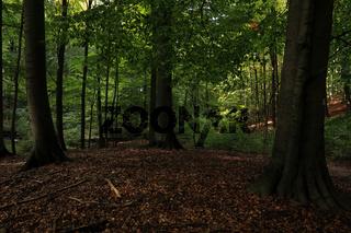 Weltnaturerbe Grumsiner Wald, Brandenburg