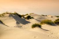 Northsea dunes
