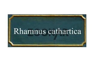 schild rhamnus cathartica, kreuzdorn