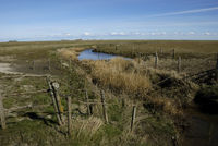 Salt Marshes on Hallig Langeness