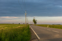 Fields of yellow rapeseed with road going to indef