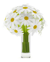 daisies in glass vases isolated on white background