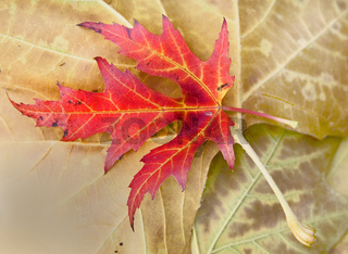 Blatt in den Farben des Herbstes