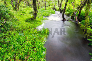 Kleiner Bach in einem Wald in Schottland