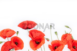Heads of red weeds on white background top view