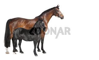 zwei Pferde Collage