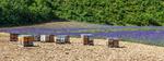 Beehive close to lavander field