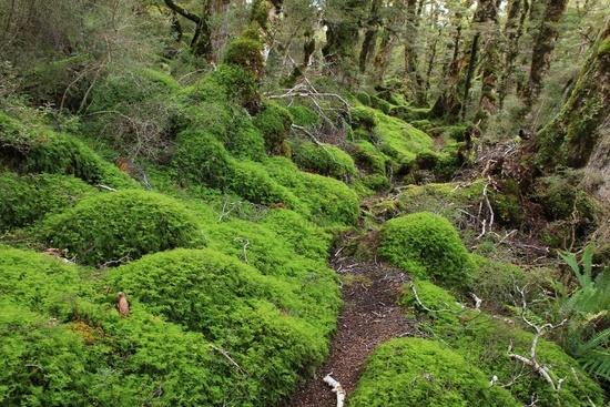 Footpath leading trough a dreamlike forest