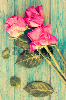 Dried roses on blue wooden background