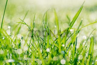 Wet grass in sunshine